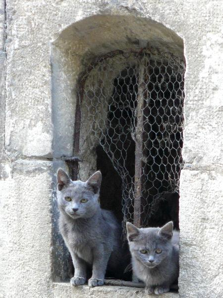 Alley Cats Clamecy France