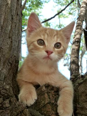 Kitten in a tree