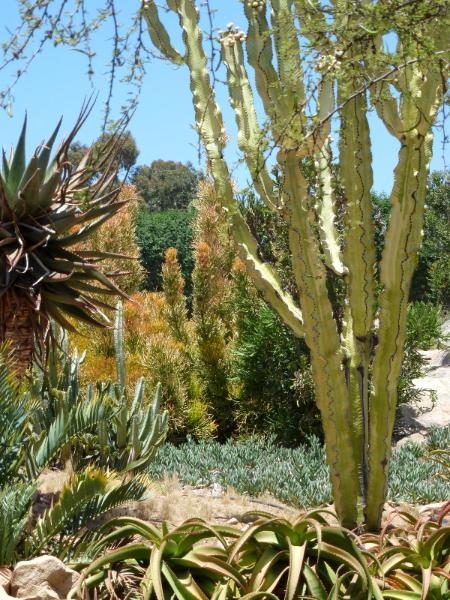 Catcus garden