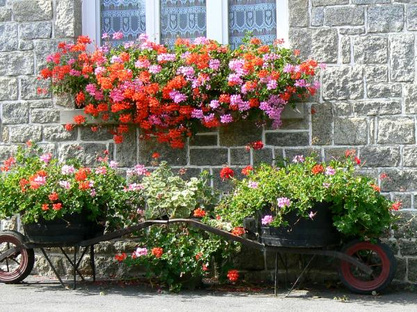 Two Wheelbarrows Brittany