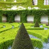 Boxwood Prague