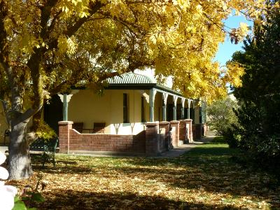 Yellow tree Australia