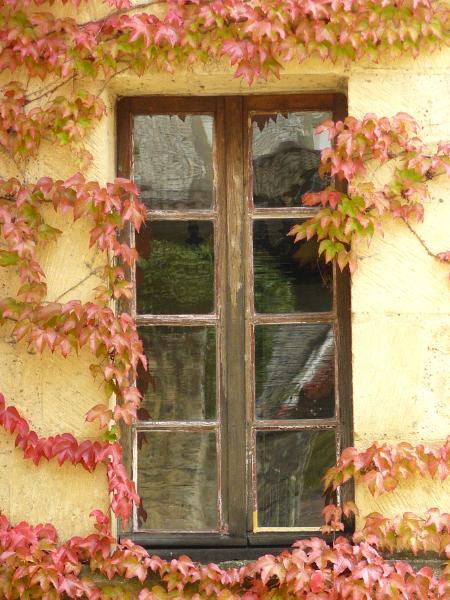 Ivy on window La Roque Gageac France