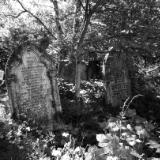 Abney Park London black & white