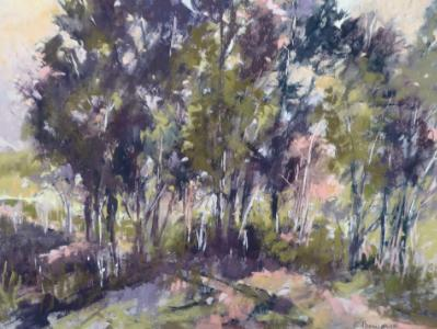 San Pasqual Trees plein air 16x12