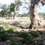 Dry river bed Australia