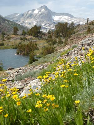 Saddlebag Lake Ca