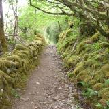 Mossy path Plockton Scotland
