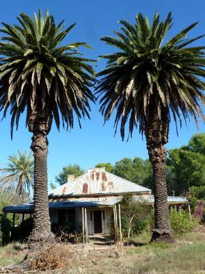 Pair of palm trees Australia