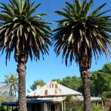 Pair of palm trees Australia